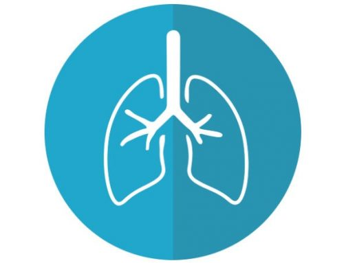 So ticken unsere Organe: die Lunge